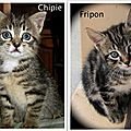 Chipie & Fripon