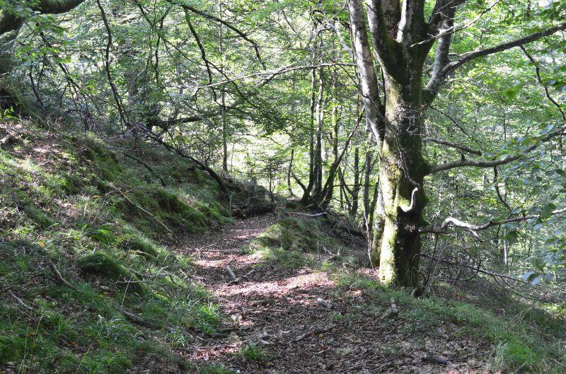 Le très beau sentier de Boesou...