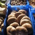 Très beaux champignons