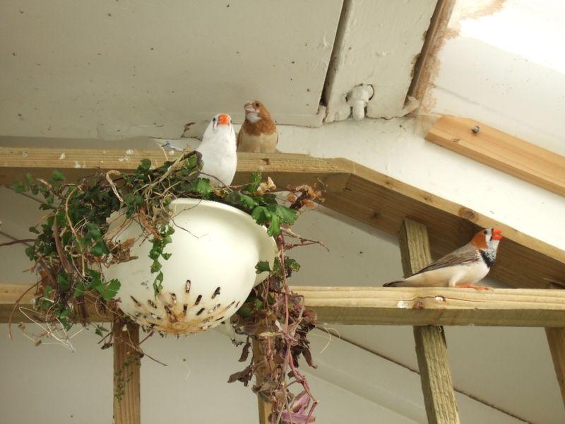 blenheim bird 2