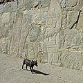 PEROU. Site archéologique de Cerro Sechin.