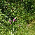 Les Orchidées du Rhône....