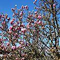 Magnolia 0602162