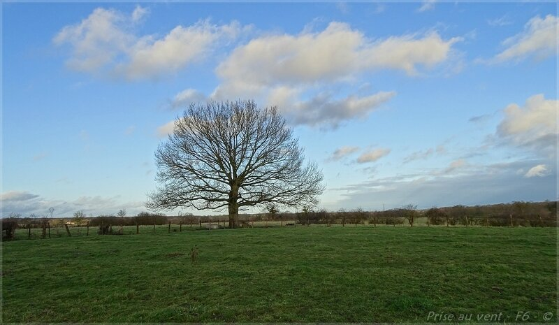 Son arbre - 1
