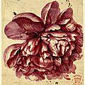 Jan Van Huysum (Dutch, 1682-1749), Flower study; <b>a</b> <b>pink</b>-red Peony-like bloom, 1697-1749