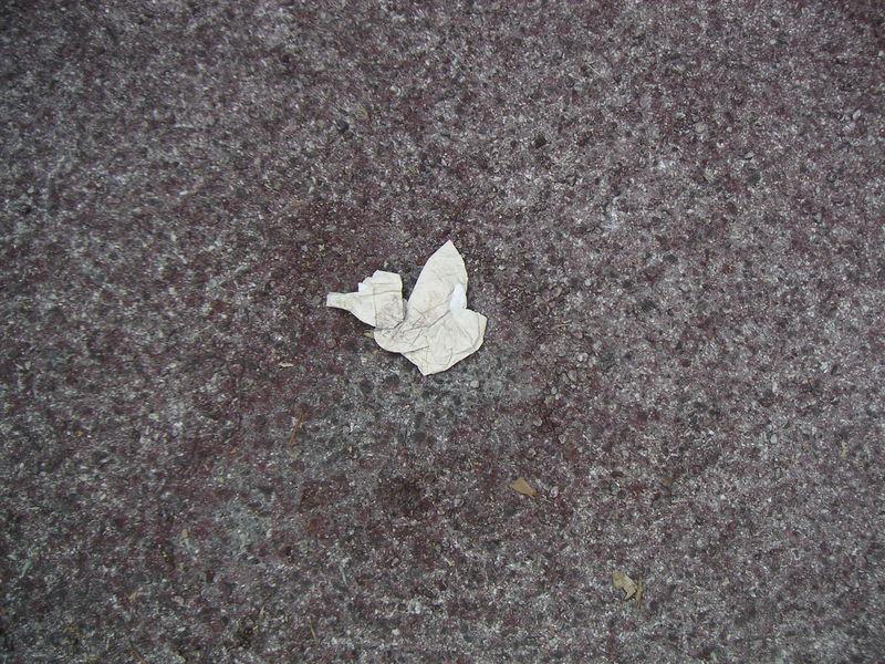 La rue, oiseau (2)