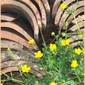 Une petite fleur jaune pourtoi