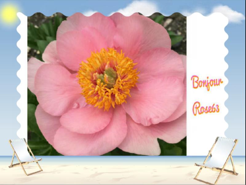Bonjour la vie Rose63