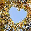 L'amour es