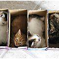 Fashion : Les box pour animaux