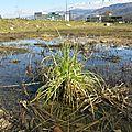 Plantes aquatiques en friche industrielle