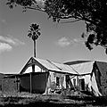 Abandoned House with Palm Tree Groenfontein South Africa 2013