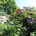 Jardin de Morailles (15)