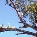 Australie Faune Flore Paysages - janvier 2005 (38)