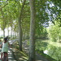 Les <b>platanes</b> du Canal condamnés