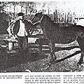 ponette landaise 1907