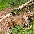 2014-05-30 LUX-1043