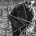 Tailleur de vignes
