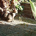 turquie : dalyan petit chaton fripon et mutin