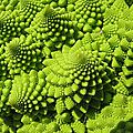 320px-Romanesco_Broccoli_detail_-_(1)