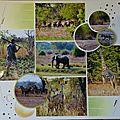 Partir en safari ... ça vous dit !!! alors c'est parti ...