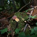 Cèpes et détails de la forêt -loire atlantique-