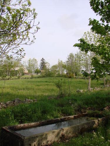 2008 05 19 Le bassin et la végétation alentour