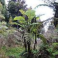 Mon voyage sur l'île de la Réunion