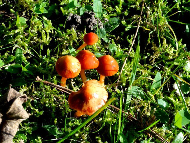 champignon-05911 (6)