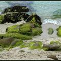 Tableaux d'algues