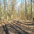 A4 - A travers bois