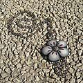fleurs de colliers.
