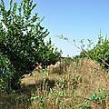 DSC_0330 jardin de l 'ecole de noh b