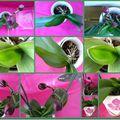Les fleurs……………