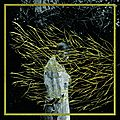 Forest Swords - <b>Engravings</b>