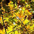 Marche dans les bois, par aline nocella