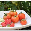 Mes premières tomates