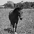 2013-02 alaferme poney