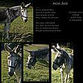 L'âne du champ d'à côté !