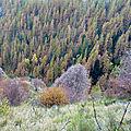 Automne au plateau de longon (06)