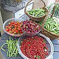 14 juin - haricots verts, petits pois, groseilles, mûroises, fraises à volonté