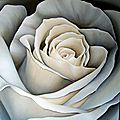 Rose blanche géante à l'<b>acrylique</b>