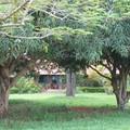Mangiers devant la maison