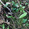 champignon-05923 (1)