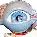 البوم العين والابصار