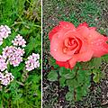 Humeur, fleurs et saveurs déconfinées (mais pas tant que ça)