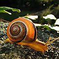 <b>Bave</b> d'escargot pour la peau