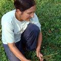 Plantes & santé magazine