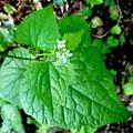 Beaumont châtaigneraie, les plantes au printemps