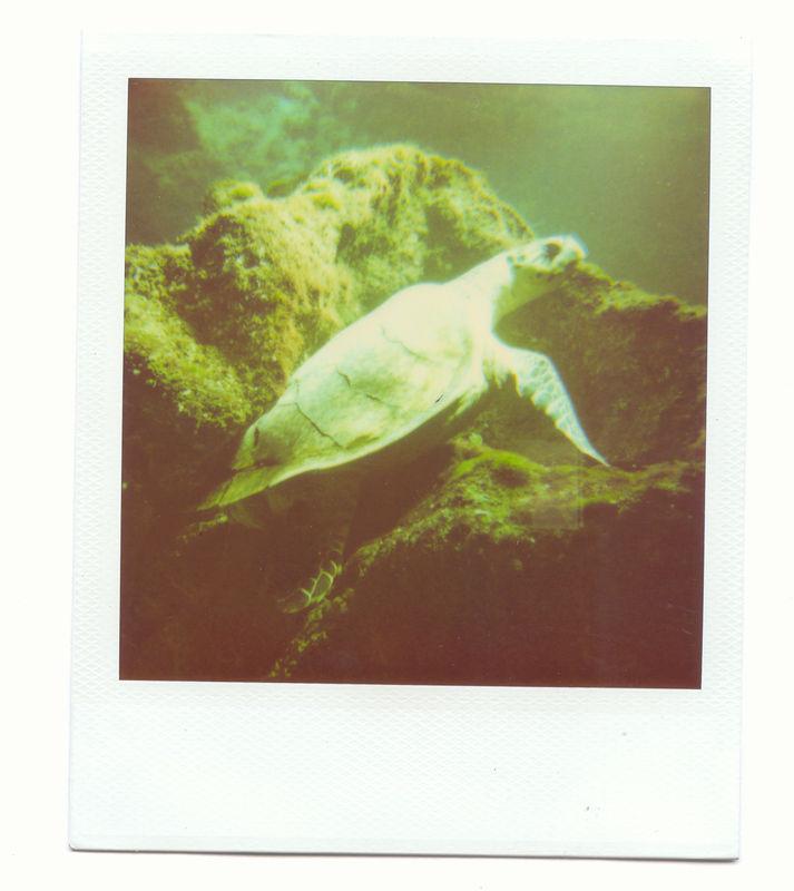 tortue d'aquarium
